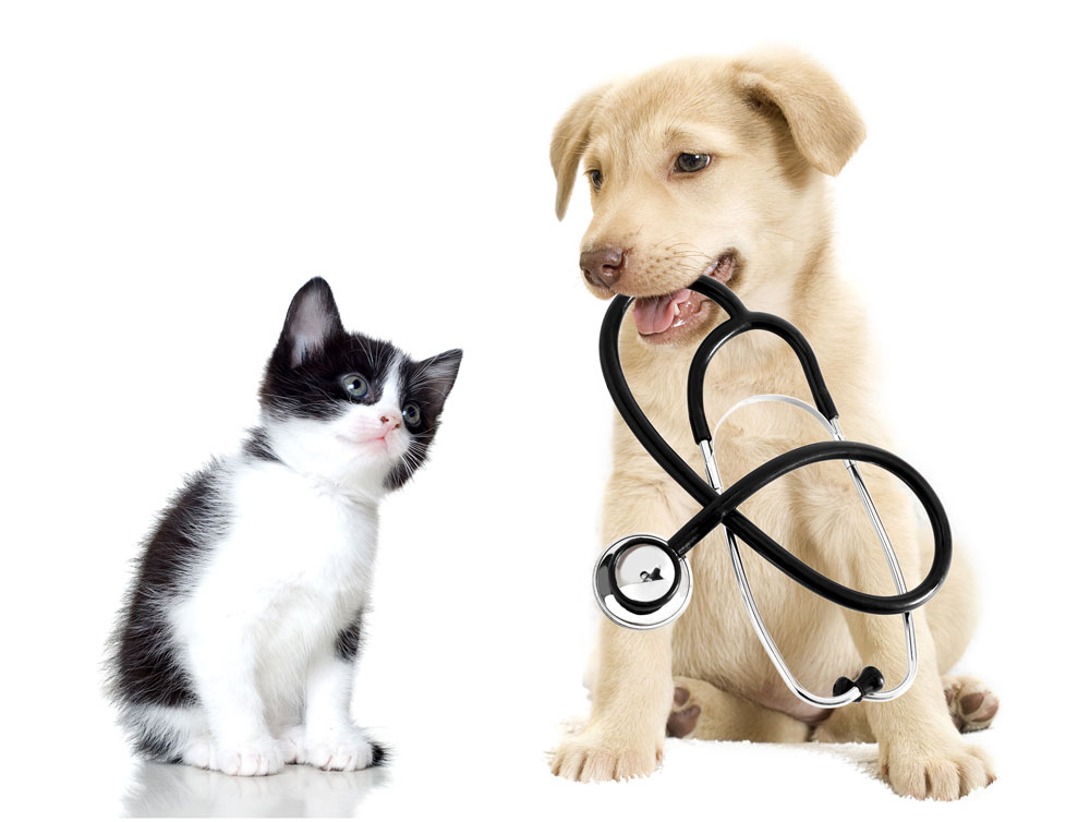 puppy and kitten online pet pharmacy